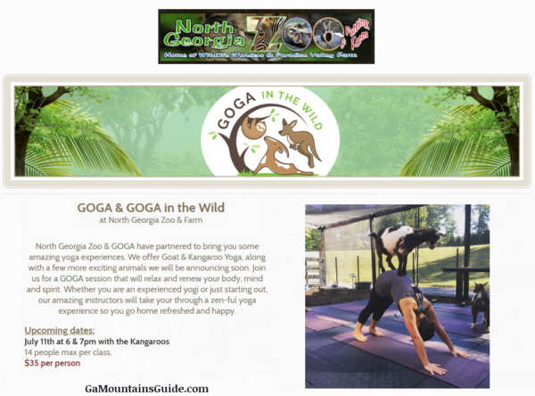 GOGA Goat and Kangaroo Yoga at the Zoo