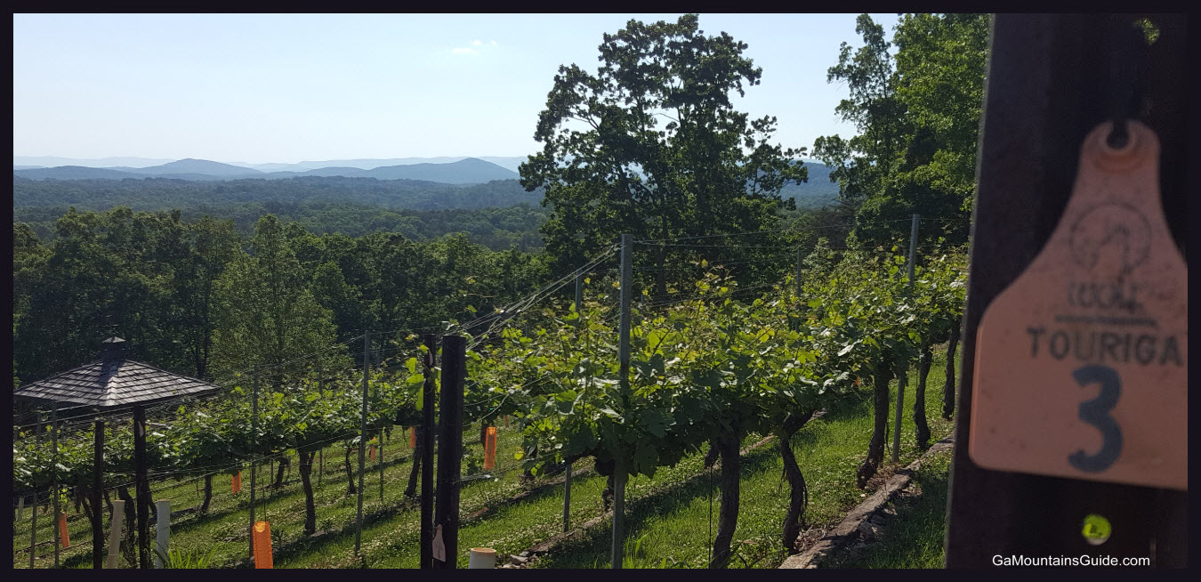 Wolf Mountain Touriga Vines and Views GaMountainsGuide.com