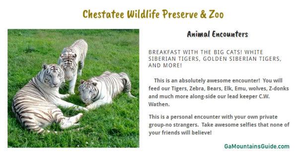 Chestatee Wildlife Preserve & Zoo in the North Georgia Mountains