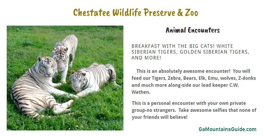 Chestatee-Wildlife-Preserve-Zoo-Ga-Mountains