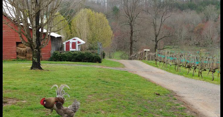 Crane Creek Vineyards Upper Hiawassee Highlands AVA