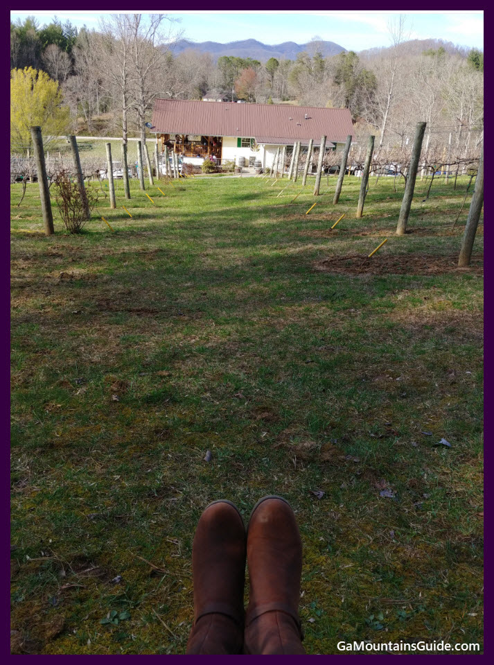 HightowerCreekVineyards-2