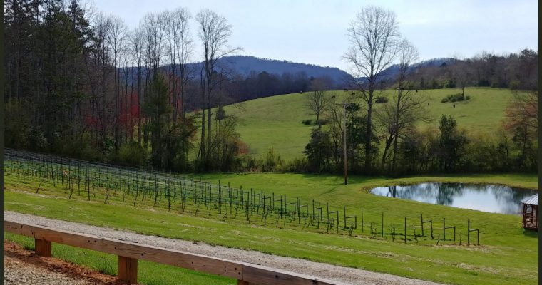 Odom Springs Vineyards Winery Upper Hiwassee Highlands AVA