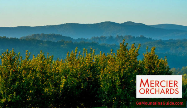 Mercier Orchards in the North Georgia Mountains
