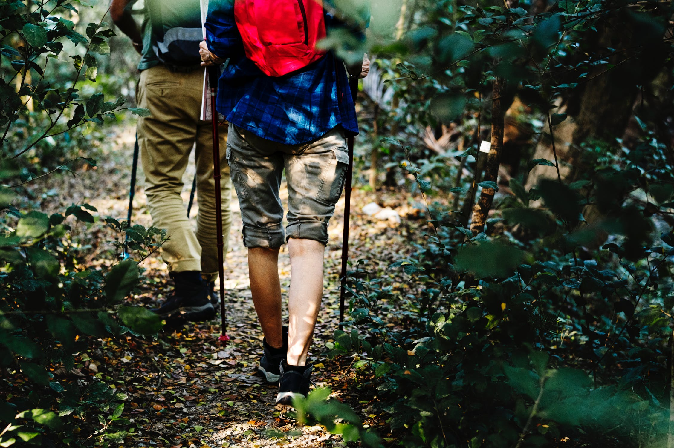 hikers-with-poles