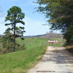 Dirt Road to Three Sisters Vineyards in the Georgia Mountains