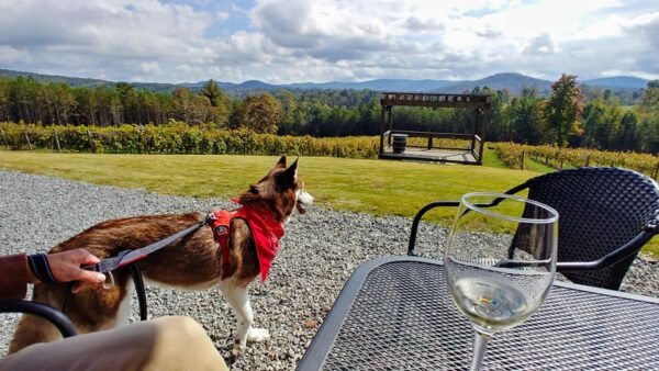 Picnicking at Ott Farms Vineyards with our Husky, Nina