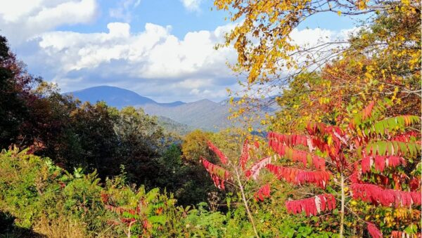 Bright Autumn Colors at Chestatee Overlook on Georgia's Dragon Eyes